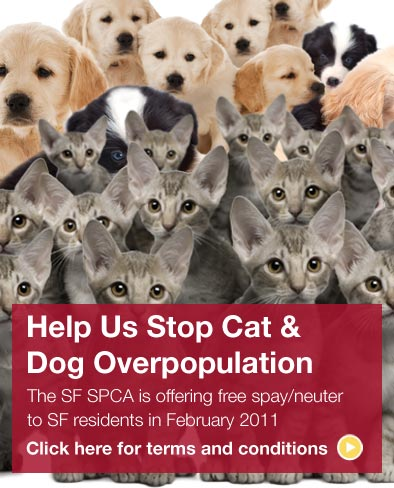 Sf Spca Offering Free Spay Neuter To Residents In February