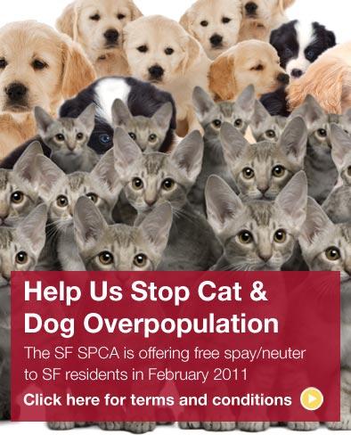 Free Cat Neutering Seattle