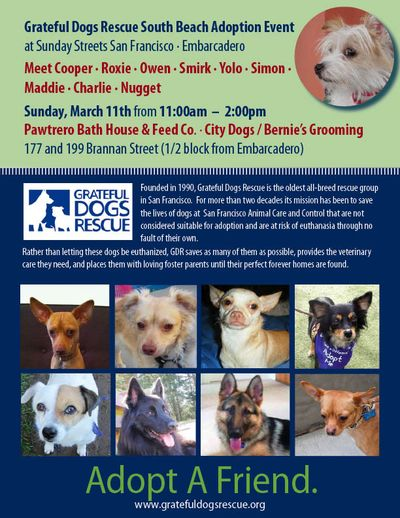 Dog-Adoption-Poster