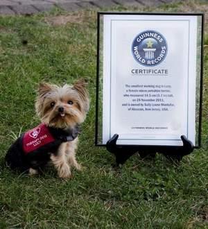 Worlds Smallest Dog Named Millie