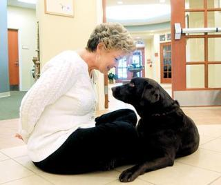 Coco-Chocolate-Labrador-Dog-Hospice Plus Compassionate Care Center in Richmond