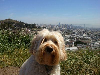 Sadie-Birthday-Pup