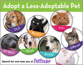 image from www.petfinder.com