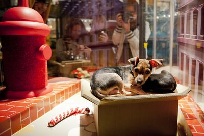 sfspca-holiday-windows-macys