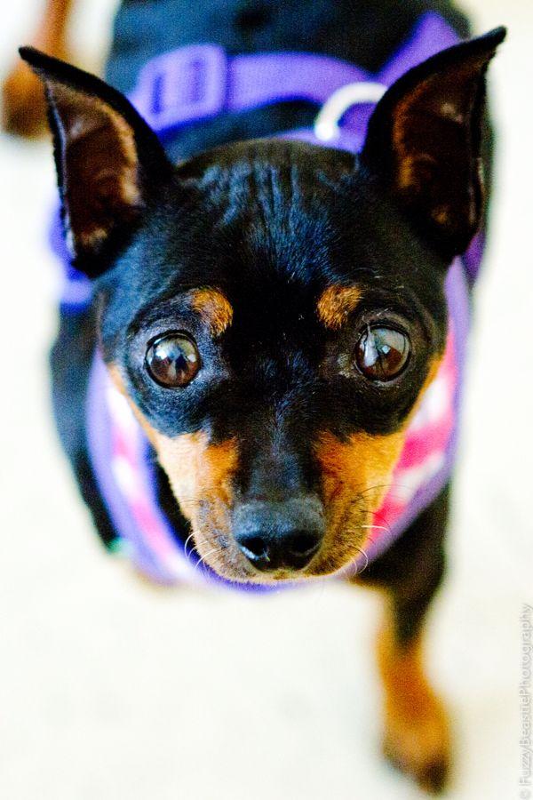 Roxy S Dog Grooming San Antonio