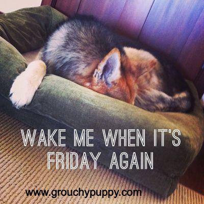 www.grouchypuppy.com