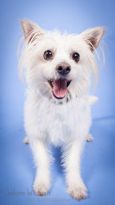 Dog Adoption San Luis Obispo Ca