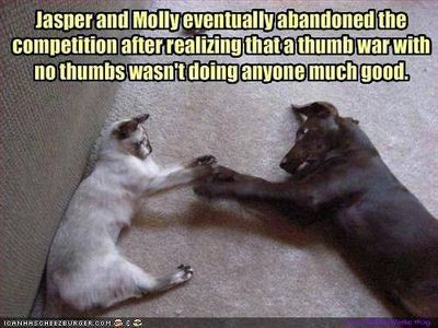 Jasper_molly_fun