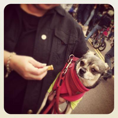 senior-dogs-sanfrancisco