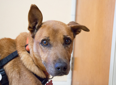 Adoptable-Senior-Dog-Spike-Muttville
