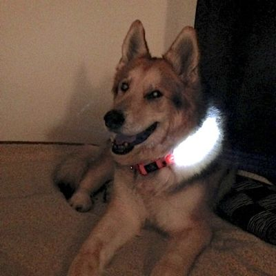 LED_Dog_Collar