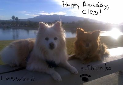 Doggy birthday greetings from Arizona