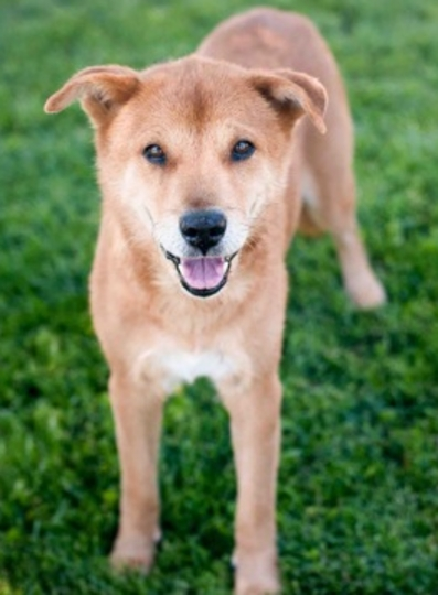 http://dogdays.grouchypuppy.com/2013/08/senior-dog-adoptions-san-francisco-chow.html