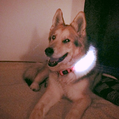 LED_Dog_Collar from www.grouchy puppy.com
