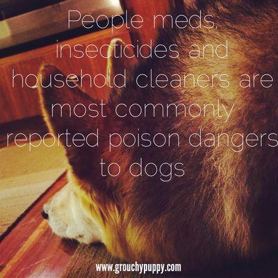 PoisonDangersDogs