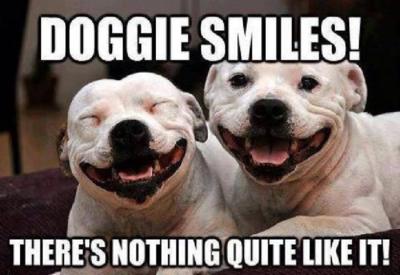 Love happy dog faces