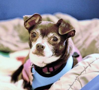 Adoptable Dogs Little Rock Ar
