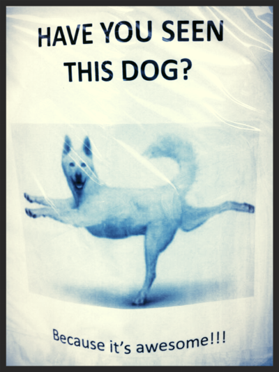 Funny dog posters