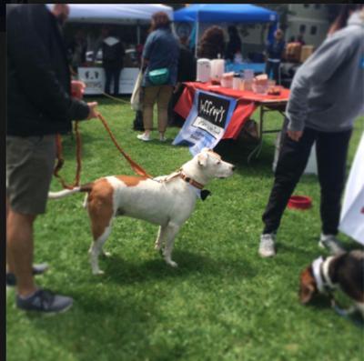 sfdogfest