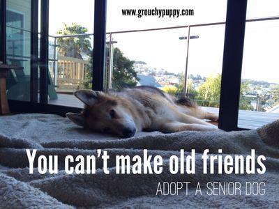 image from http://www.grouchypuppy.com/.a/6a01053649b34f970b01a73dac5944970d-pi