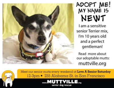 muttville.org