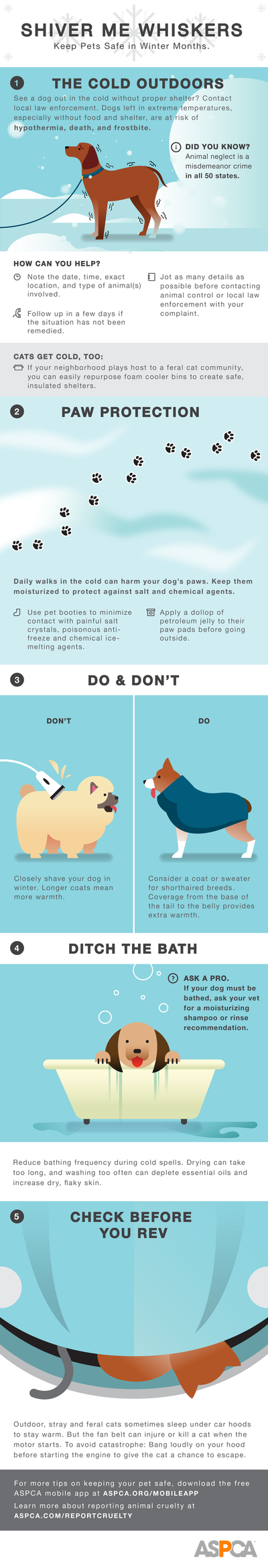 ASPCA Cold Weather Infographic