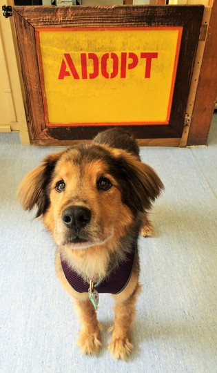 image from www.muttville.org