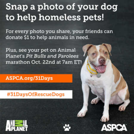 aspca.org/31Days