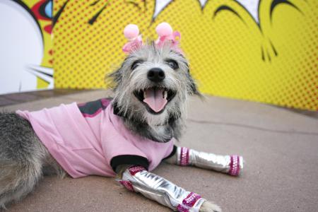 2016 Pink Wonderbatgirl