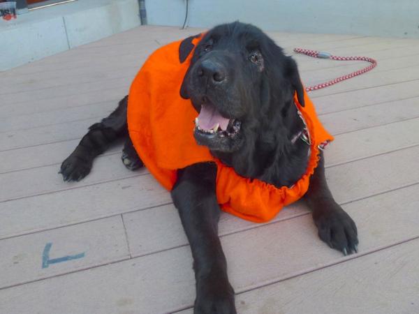 Dog Rescue Organizations In Arkansas