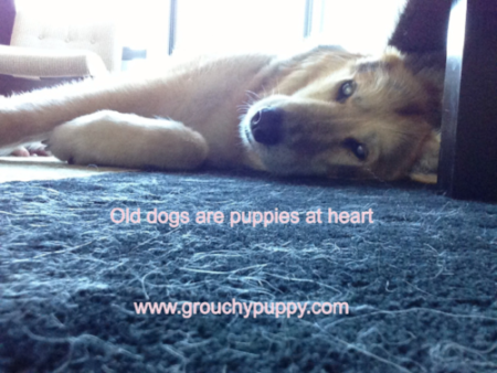 image from www.grouchypuppy.com